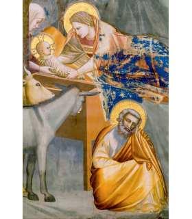 Grand Format Giotto La nativite du Christ - adoration des bergers